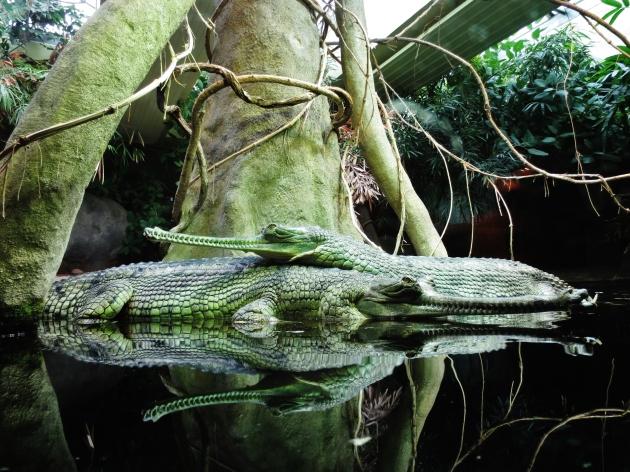 Prague Wandering Spring 2013 Issue Number 2 Crocodiles